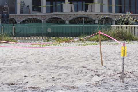 Howard does have neighbors on the gulf side who have just recently moved in.  The pink tape along with a yellow and black warning notice telling Mr. Howard that there is a sea turtle nest in front of his new house but on the beach.  There are actually three of the nests along the property. (Eddie Michels/Photo)