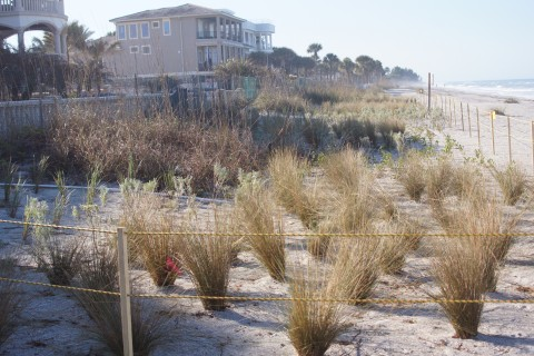 Some nice foliage planted beach side. (EDDIE MICHELS PHOTO)