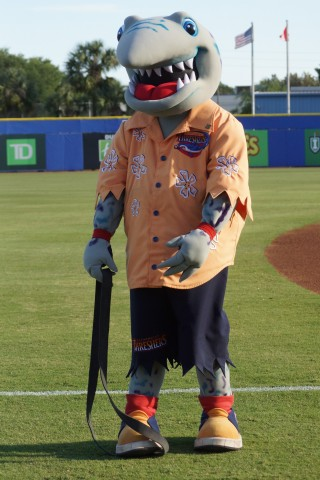 Clearwater Mascot Phinley Hasn't Mastered the Excerise Straps in Dunedin. (EDDIE MICHELS PHOTO)